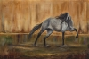 Gray's Canyon