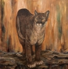 Canyon Dweller
