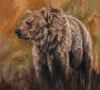 Bearly Defined