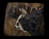 That's a lot of Bull!