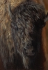 Defiance Up Close